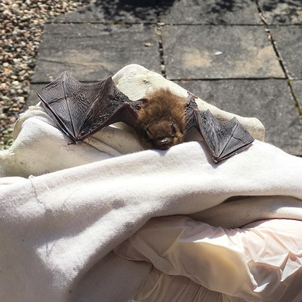 Our Batty Story