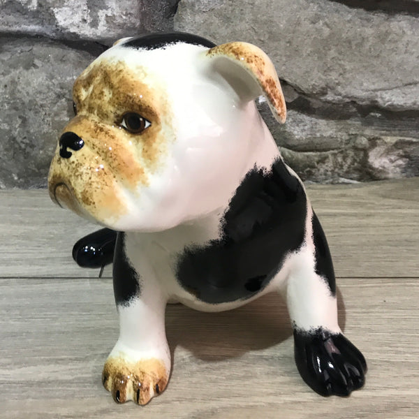 Black and White Bulldog