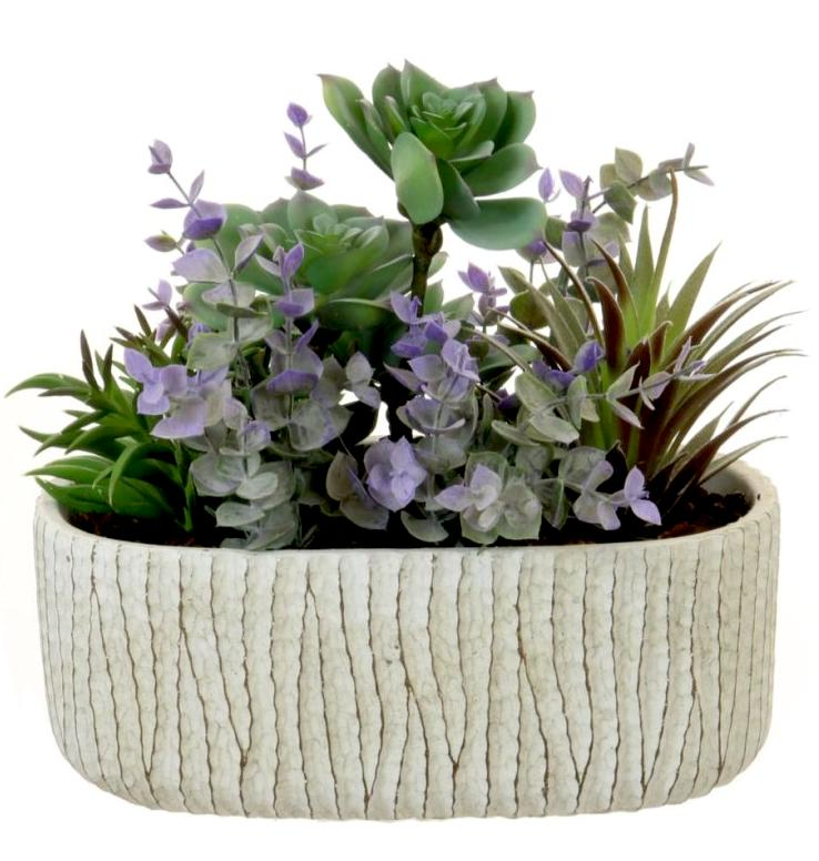 Succulent Arrangement in trough - Strelitzia's Floristry & Irish Craft Shop