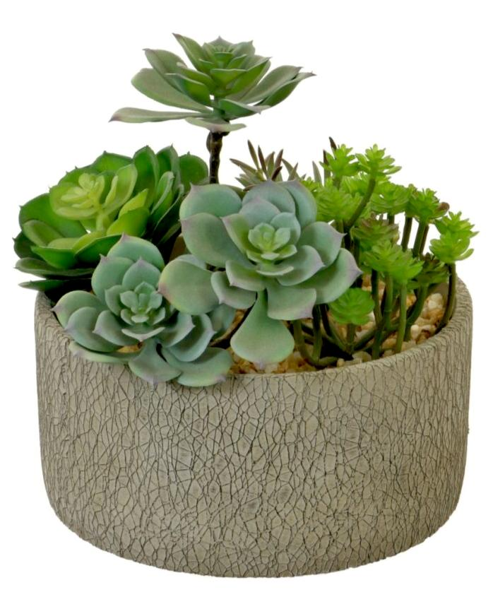 Succulent Arrangement - Strelitzia's Floristry & Irish Craft Shop