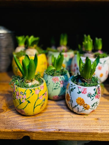 Hyacinth - a single bulb in quirky printed pot - Yellow