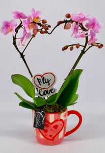 Love Heart Orchid - (14w x 40h) - Strelitzia's Floristry & Irish Craft Shop