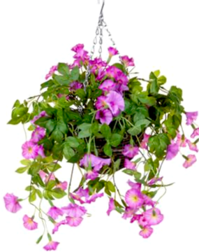 Exterior trailing Petunia Hanging Baskets - Strelitzia's Floristry & Irish Craft Shop