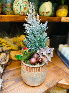 Rustic Fresh Miniature Christmas Tree Plant In Clay Pot - Strelitzia's Floristry & Irish Craft Shop