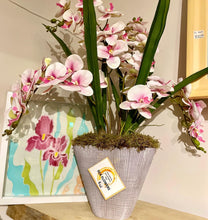 Load image into Gallery viewer, Extra Large Phalaenopsis Orchid Arrangement - Strelitzia's Floristry & Irish Craft Shop