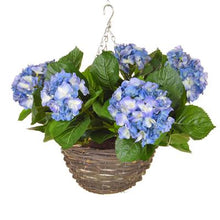 Load image into Gallery viewer, Hydrangea Hanging Baskets 30cm - Strelitzia's Floristry & Irish Craft Shop