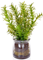 Herbs in Glass Jar [Rosemary, Mint & Basil] - Strelitzia's Floristry & Irish Craft Shop