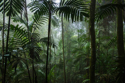 Rainforest 101: Why Is This Type of Ecosystem So Valuable to Our Planet?