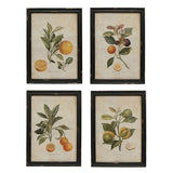 SET of 4 Botanical Wall Art