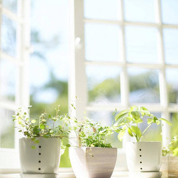 spring, plants, open windows, march, spring cleaning, herbs, potted plants, organizing, home decor