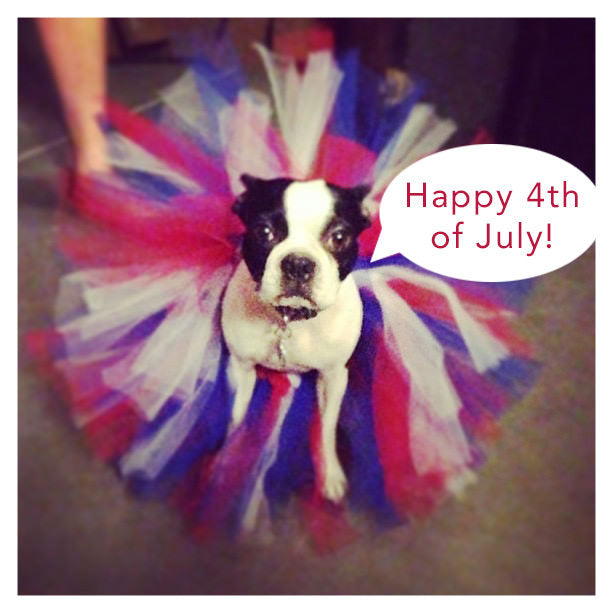 4th of July Dog Costume