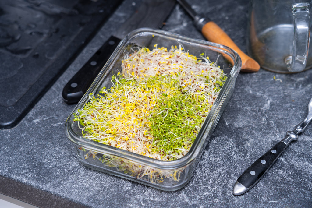 Sulforaphane and why Broccoli Sprouts are the Ultimate Superfood