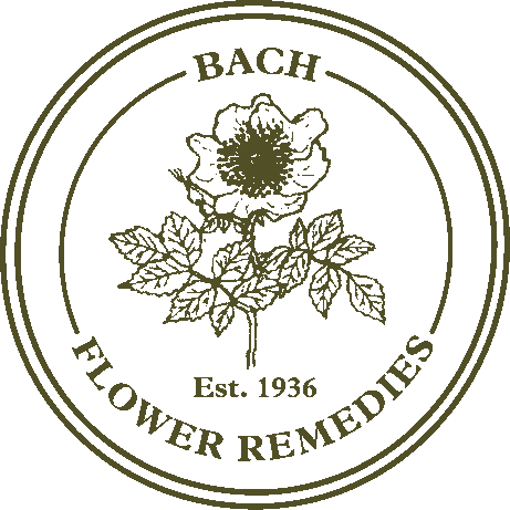 Image of Rock Rose - Bach Original Flower Remedies *AVAILABLE ON ORDER*