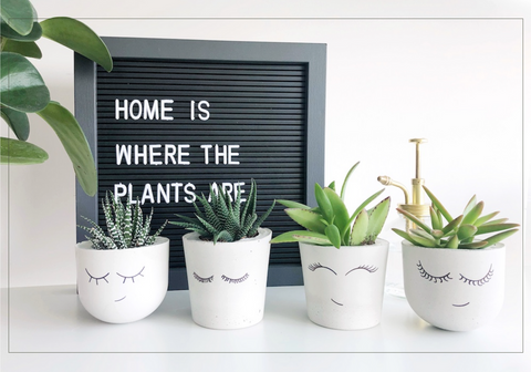 Cacticus-Home-Is-Where-The-Plants-Are-Succulent-Lineup-Terra-Collective