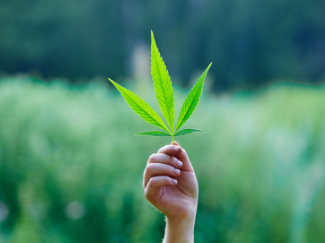 10 Amazing Facts about Hemp that will Blow Your Mind