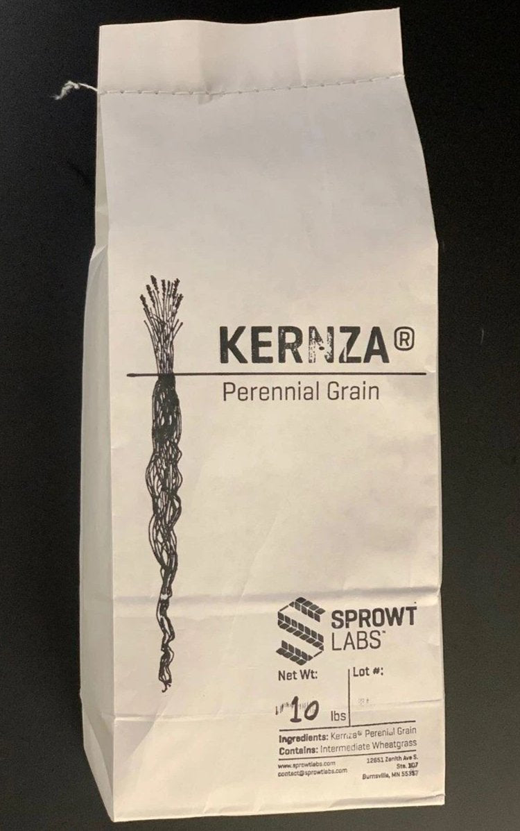 10 lb Sample Bag Kernza® Flour