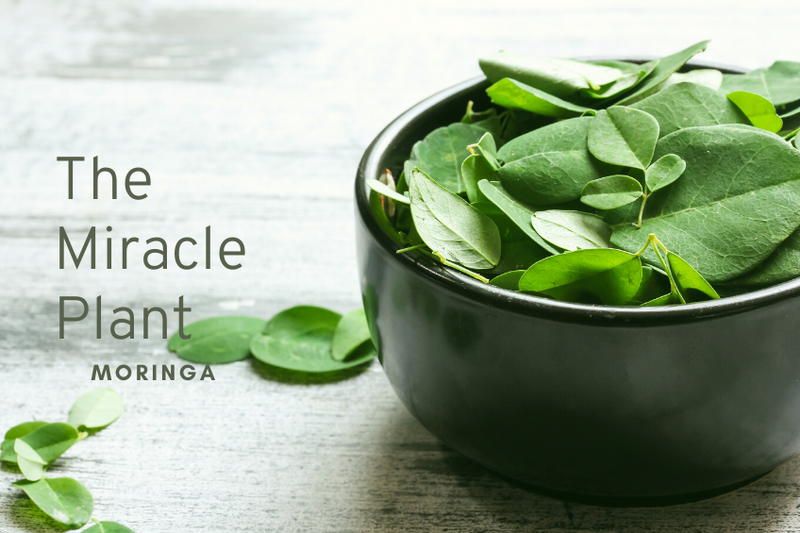Let's Talk About the Miracle Tree - Moringa!