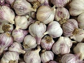 1 CLOVE SEED GARLIC