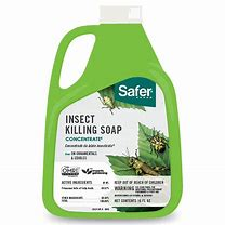 SAFER INSECT KILLING SOAP 16 OZ CONCENTRATE