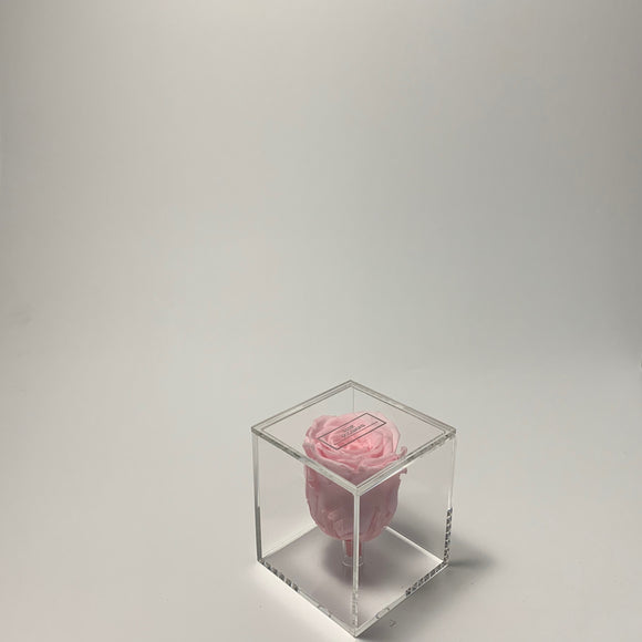 Transparent Single Rose Pink