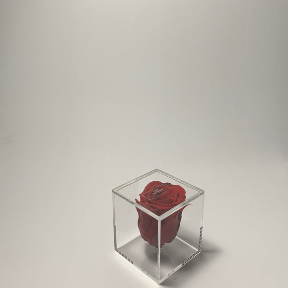 Transparent Single Rose Red
