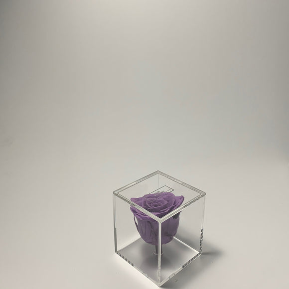 Transparent Single Rose Lavender