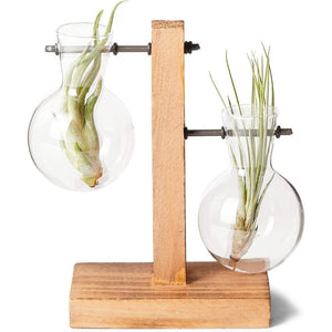 Bulb Vase Planter for Desk, Glass Holder for Indoor Plants (10 x 6 Inches)