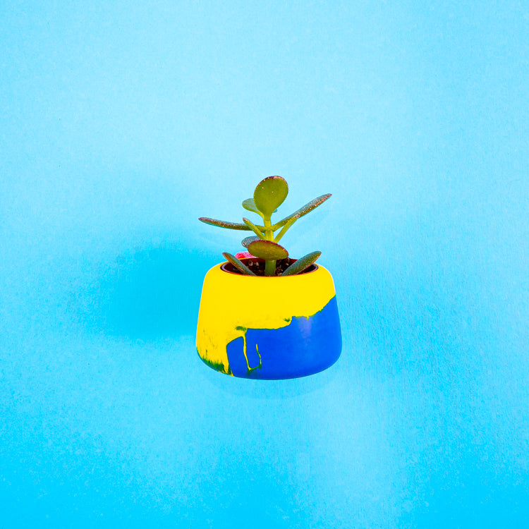 Colour Clash Blue/Yellow Planter