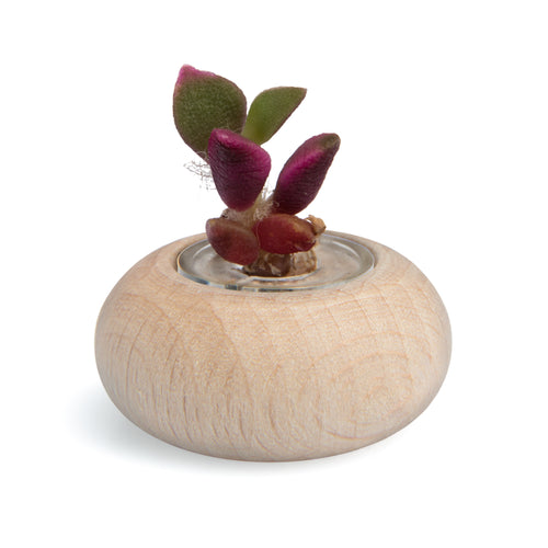 Wooden Jar Stone Rose