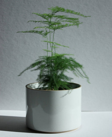 Hasami Porcelain Large Planter
