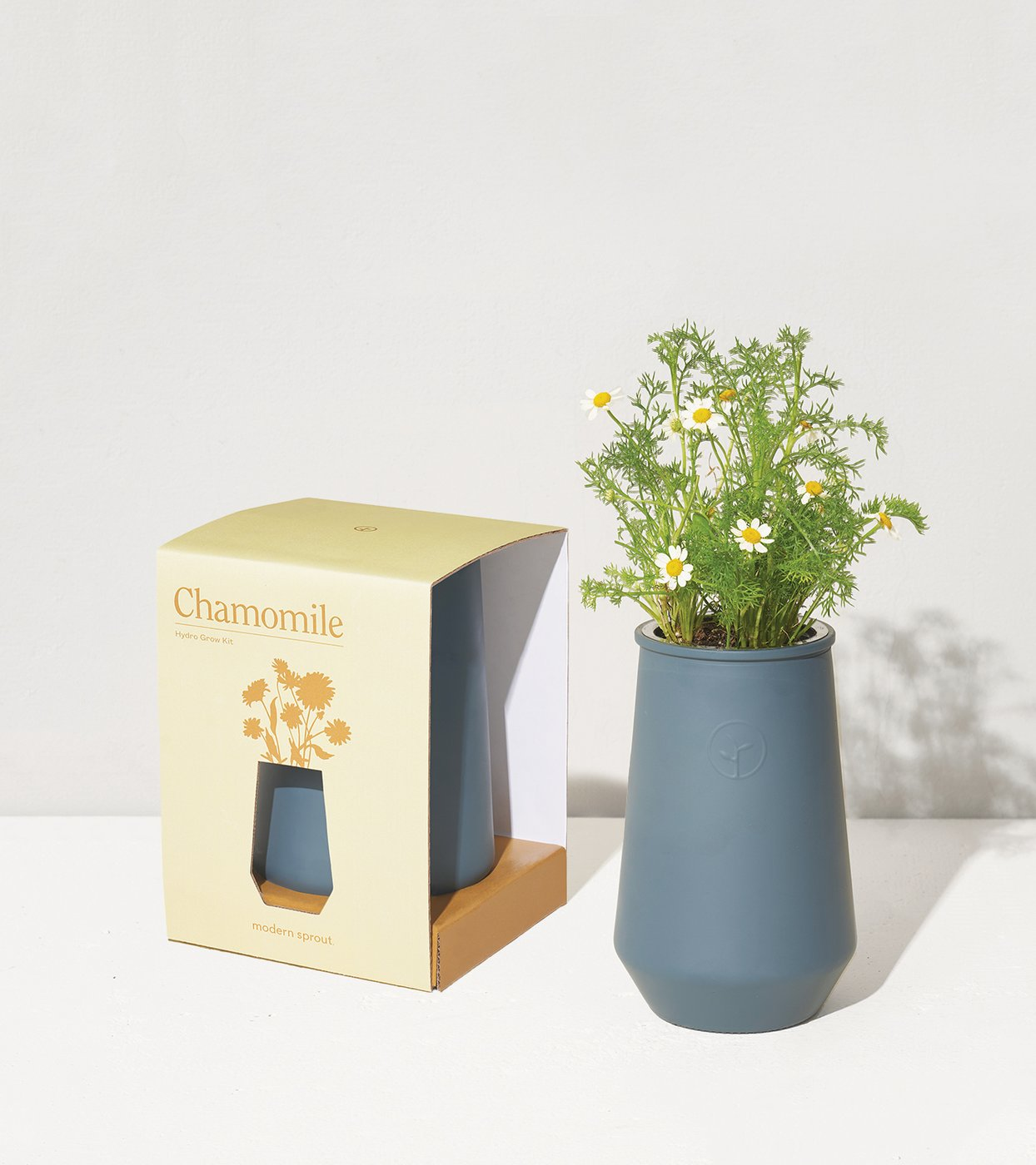 Smoked Glass Tapered Tumbler Grow Kit - Chamomile