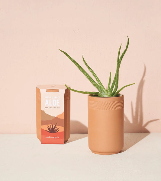Terracotta Container Grow Kit - Aloe