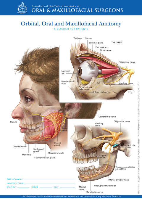 Normal Anatomy of Orbital, Oral and Maxillofacial