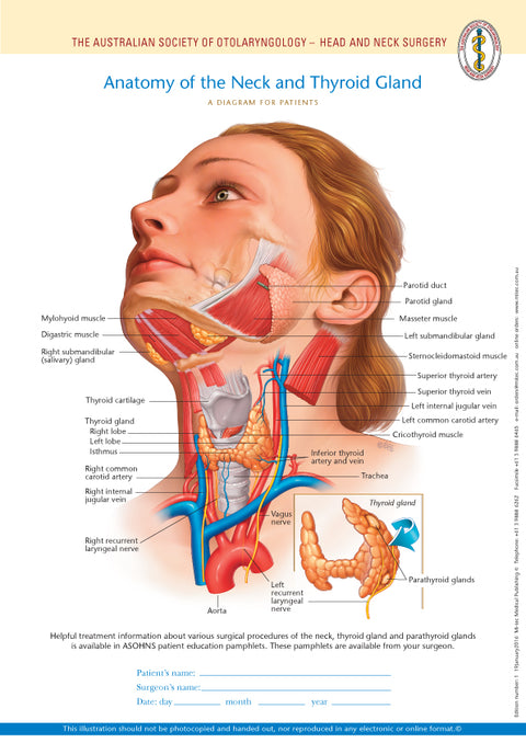 Normal Anatomy of the Neck and Thyroid Gland