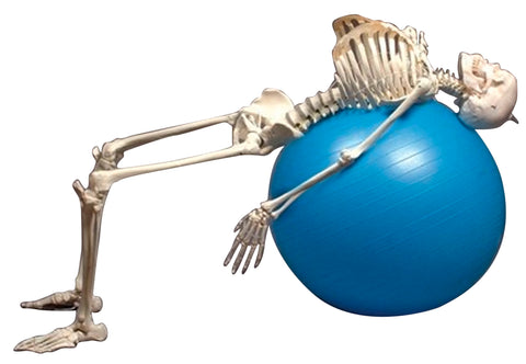 Flexible Physiotherapy Skeleton with Stand