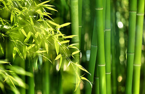 Bamboo - Fragrance Oil