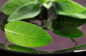 Blackberry Sage - Fragrance Oil