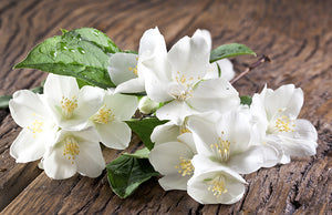 Jasmine - Fragrance Oil