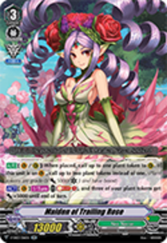 V-EB03/016EN Maiden of Trailing Rose