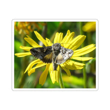 Load image into Gallery viewer, Moth on Daisy Sticker
