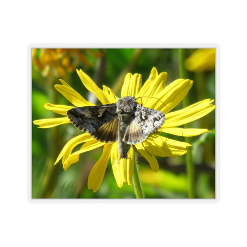Moth on Daisy Sticker