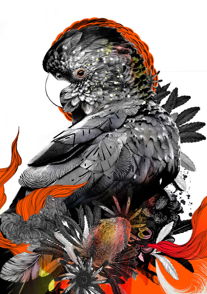 Limited Edition Print 'Red Tailed Black Cockatoo' - Sarah Howell Limited Edition - 1