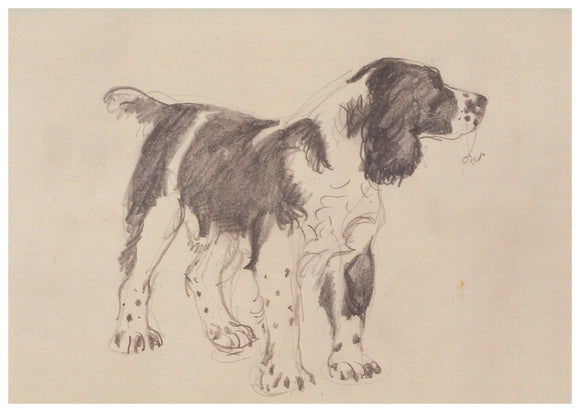 Tunnicliffe Card - Springer Spaniel