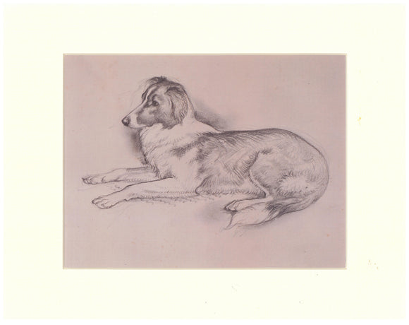 Tunnicliffe Print - Collie