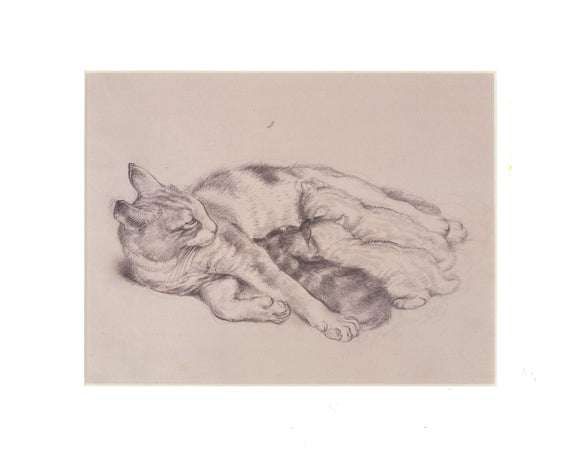 Tunnicliffe Print - Cat with Kittens