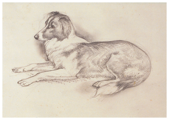Tunnicliffe Card - Collie