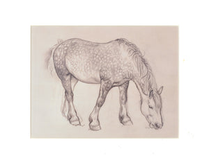 Tunnicliffe Print - Horse