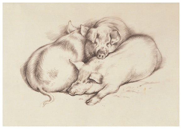 Tunnicliffe Card - Pigs