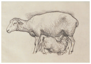 Tunnicliffe Card - Sheep with lamb