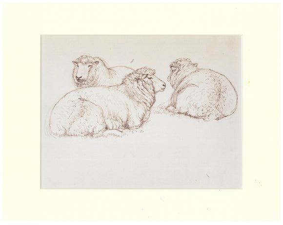 Tunnicliffe Print - Sheep